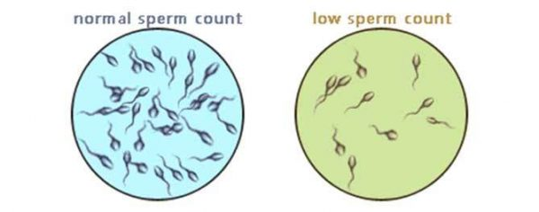 Fewer Sperms than normal