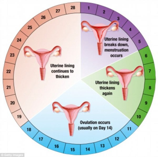 Menstrual_Cycle_And_Your_Health